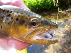 Fish Love Terrestrials in the Driftless