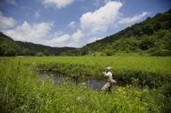 Driftless Meadow Stream