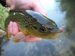 Scuds are very important in the Driftless.